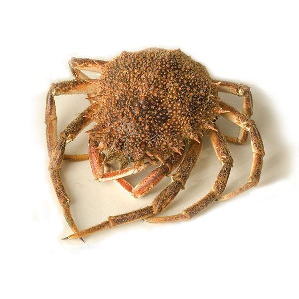 Vente araignée de mer