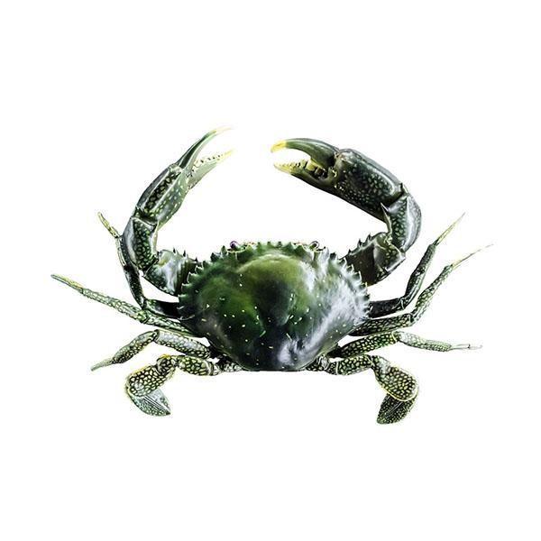 Vente de crustacés